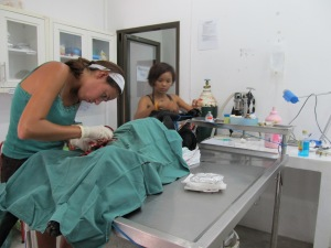Vet Natasha and Thai nurse asst Lot.