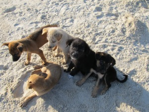 Beach puppies (10)