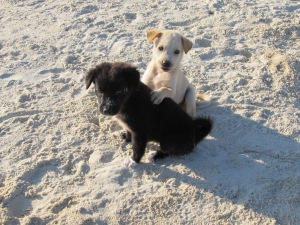 Beach puppies (11)