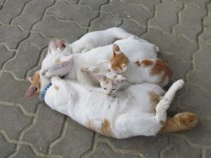 Lotus Dive Center Kitties