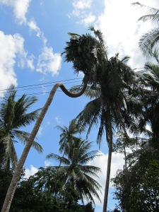 Creative Coconut Palm