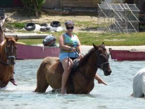 horse ride and swim Jamaica (1)