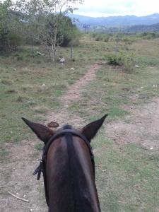 Jamaica horse and ride through Chukka (2)