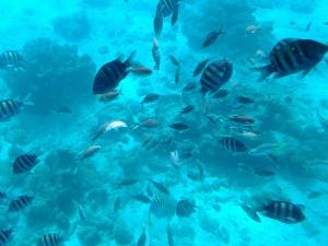 Curacao (10)