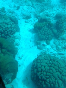 Coral formations