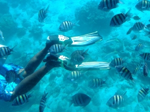 Curacao (9)