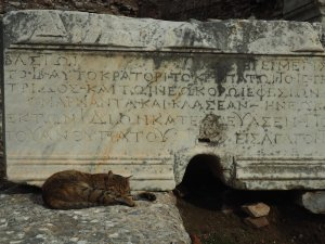 Kitty of Ephesus