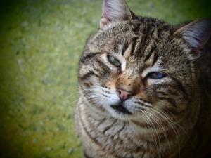 my favorite Tomcat