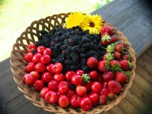 Mulberries, Strawberries, cherries oh my!!!